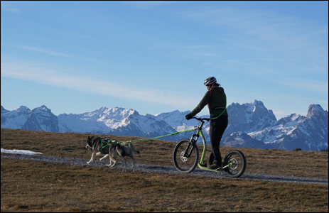 Zughundetraining mit 2 Hunden GRAVITY Scooter
