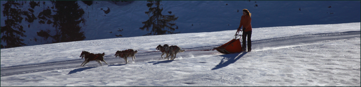 Allround Basic Sleddogline